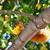 squirrel eating apple stock photo © saddako2