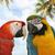 żółty · niebieski · drzewo · ptaków · tropikalnych · zwierząt - zdjęcia stock © saddako2
