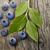 fresh bilberries stock photo © saddako2