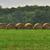 дождливый · день · урожай · солнце · природы · пейзаж - Сток-фото © saddako2