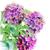 aquarel · afbeelding · roze · dahlia · digitale · schilderij - stockfoto © saddako2