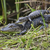 foto's · hoofd · dier · hagedis · kameleon · krokodil - stockfoto © saddako2