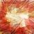 azul · esqueleto · folhas · abstrato · projeto · folha - foto stock © saddako2