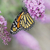 vlinder · bloem · tuin · zwarte · kleur · dier - stockfoto © saddako2