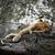 female lion sleeping stock photo © saddako2