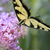 wschodniej · Tygrys · zdjęcie · parku · Virginia - zdjęcia stock © saddako2