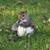 grey squirrel stock photo © saddako2