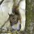 eastern gray squirrel stock photo © saddako2