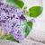 friss · kosár · gyönyörű · ünnep · asztal · tavasz - stock fotó © saharosa
