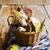 лес · съедобный · грибы · плетеный · корзины - Сток-фото © saharosa