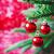 クリスマス · フォーム · クリスマスツリー · 背景 - ストックフォト © saharosa