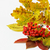 jagody · pozostawia · czerwony · świeże · zielone · liście · Błękitne · niebo - zdjęcia stock © saharosa