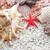 playa · de · arena · estrellas · de · mar · espacio · arena · Shell - foto stock © sailorr