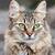 güzel · kedi · yeşil · gözleri · yalıtılmış · beyaz · portre - stok fotoğraf © sailorr