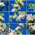cerisiers · en · fleurs · ensemble · beauté · arbre · fleur - photo stock © sailorr