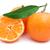 tangerines stock photo © sailorr