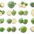 meyve · yeşil · bıçak · tarım · ananas · taze - stok fotoğraf © sailorr