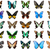 蝶 · コレクション · カラフル · 孤立した · 白 · 蝶 - ストックフォト © sailorr