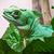 緑 · 龍 · トカゲ · 野生動物 - ストックフォト © sailorr