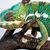 panter · bukalemun · doğal · yetişme · ortamı · Rainforest · park - stok fotoğraf © sailorr