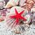 coleção · conchas · branco · praia · sol · fundo - foto stock © sailorr