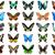 exótico · colorido · borboletas · quatro · isolado · branco - foto stock © sailorr