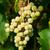 yeşil · yaprakları · bahar · soyut · dizayn · arka · plan - stok fotoğraf © sailorr