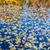 toamnă · râu · fotografie - imagine de stoc © sailorr