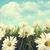 branco · margaridas · blue · sky · nuvens · céu · primavera - foto stock © sandralise