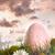 алюминий · высокий · трава · небе · саду · зеленый - Сток-фото © sandralise