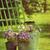 flores · horticultura · cerca · jardim · pedra · chuveiro - foto stock © sandralise
