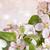 güzel · sakura · ağaç · park - stok fotoğraf © sandralise