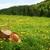 groen · gras · witte · bloemen · vierkante · bloem · gras · abstract - stockfoto © sandralise