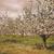 verger · de · pommiers · printemps · fleur · feuille · jardin · été - photo stock © sandralise