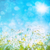 taze · buğday · çimi · çiy · damla · mavi · gökyüzü · su - stok fotoğraf © sandralise