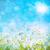 fresche · wheatgrass · rugiada · gocce · cielo · blu · acqua - foto d'archivio © sandralise