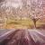 voorjaar · appelboomgaard · rij · appel · bomen - stockfoto © sandralise