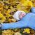 heiter · kleines · Mädchen · Herbst · farbenreich · Park · wenig - stock foto © sapegina