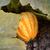 a · rayas · festival · calabacín · creciente · hojas · Bush - foto stock © sarahdoow