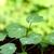 feuilles · vertes · semis · lumineuses · vert · bokeh - photo stock © sarahdoow