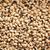 secas · preto · ervilhas · feijões · isolado · branco - foto stock © sarahdoow