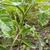 faible · vert · tomate · grandir · feuillage · usine - photo stock © sarahdoow