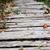 wooden walkway leads into a wood stock photo © sarahdoow