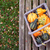orange green and yellow ornamental gourds in a basket stock photo © sarahdoow