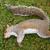 morto · feminino · esquilo · grama · olho - foto stock © sarahdoow