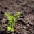 苗 · 成長 · 土壌 · 緑 · 春 · 地球 - ストックフォト © sarahdoow