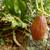 brun · concombre · croissant · vigne · jardin - photo stock © sarahdoow