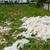 ovelha · grama · fazenda · campo - foto stock © sarahdoow