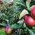 piros · almák · érett · szőlőszüret · gyümölcsös · tele - stock fotó © sarahdoow