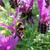 méh · pillangó · levendula · virágok · nagyszerű · méhek - stock fotó © sarahdoow
